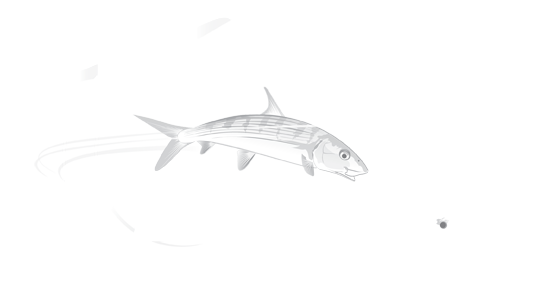 Reel Belize Fly Fishing Logo Footer